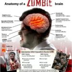 Diagnosis zombie: the science behind the undead apocalypse